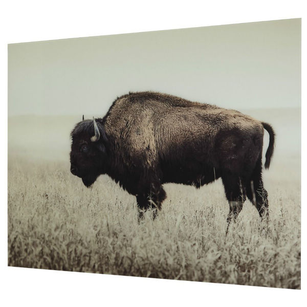 Lone Bison Wall Art